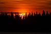 Sunrise through the trees on Butler Island across the Moose River from Moosonee 2018 September 10.p