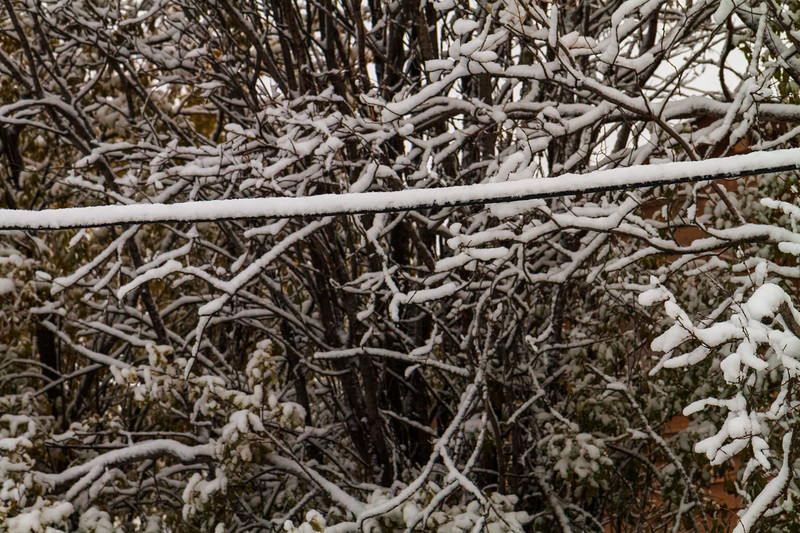 Snow on the wires and branches.