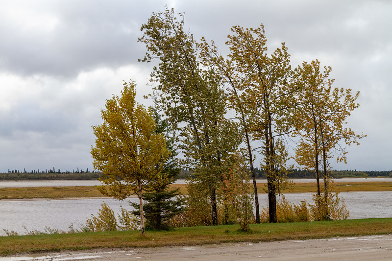 Trees along the Moose River on a windy morning.
