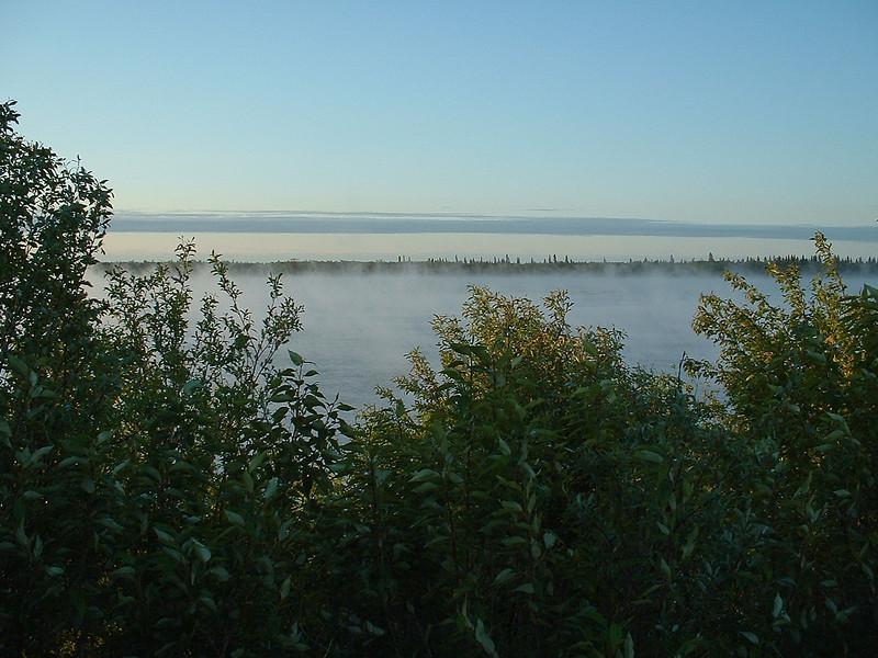 2003 June 19 vegetation along the Moose River and fog beyond.