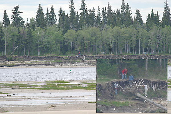 People examining a fallen tree on Charles Island. 2004 June 20th.