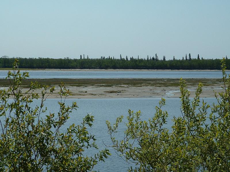 Looking across the Moose River towards Charles Island. Moosonee shoreline bushes in foreground. 2003 June 12th