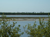 Looking across the Moose River towards Charles Island. Moosonee shoreline bushes in foreground. 2003 June 12th