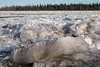 Ice on the Moose River after breakup.