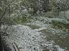 Snow in back yard at Keewaytinok Native Legal Services 1998 May 29