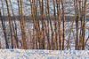 Moose River seen through trees along the river bank in Moosonee. 2006 January 28