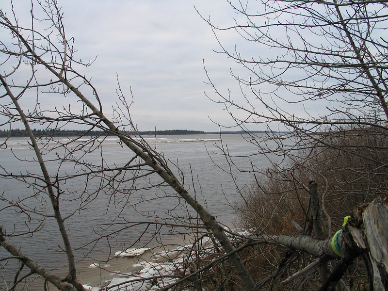 Broken trees along the river in Moosonee. 2003 November 19th.