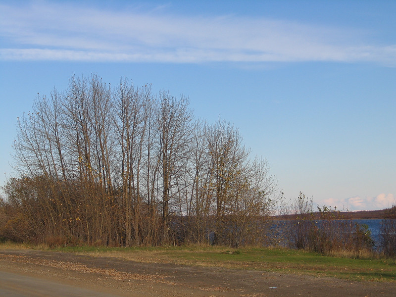 Trees along the Moose River 2003 October 20