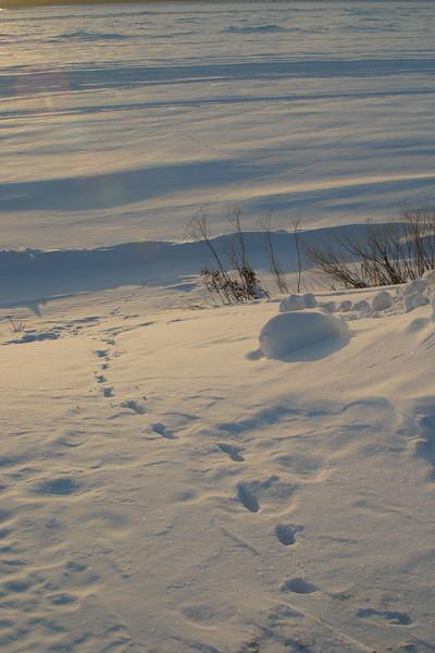 Tracks in the snow 2004 December 30