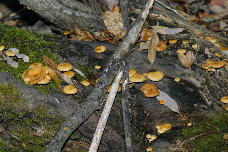 Mushrooms in the backyard 2004 October 24