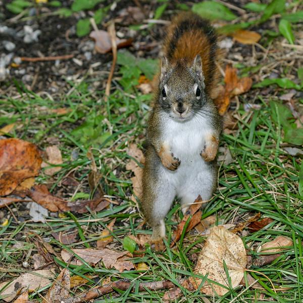 Squirrel standing 2004 October 24.