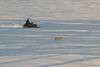 Snowmobile and dog on the river 2004 December 30.