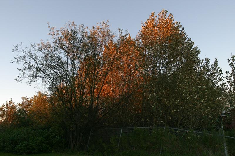 Trees behind Keewaytinok Native Legal Services 2004 September 28