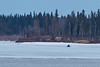 Snowmobile on the Moose River 2011 April 24th heading to Moose Factory from Moosonee.