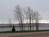 Trees along riverbank