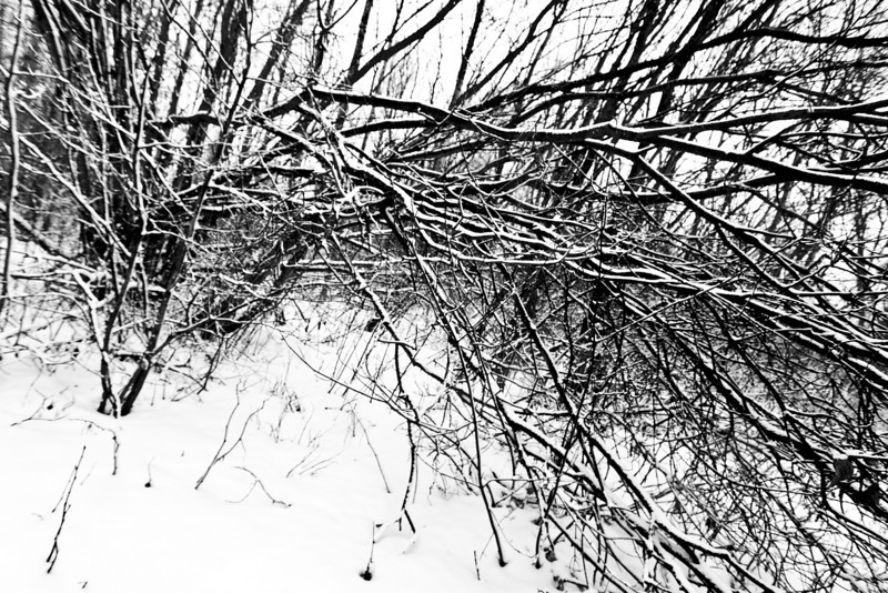 Branches and snow in back yard 2011 April 17th