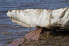 Ice floe sitting on top of granite.