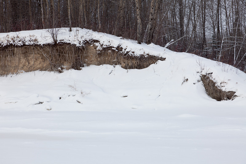 Bank erosion along the Moose River up river of Butler Creek.