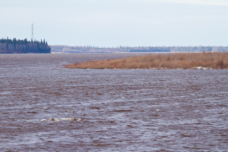 View up the Moose River towards hydro towards 2011 May 2nd
