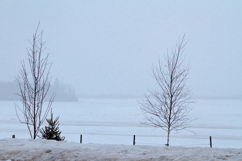 Looking across the Moose River towards Butler Island in snow 2011 April 4th