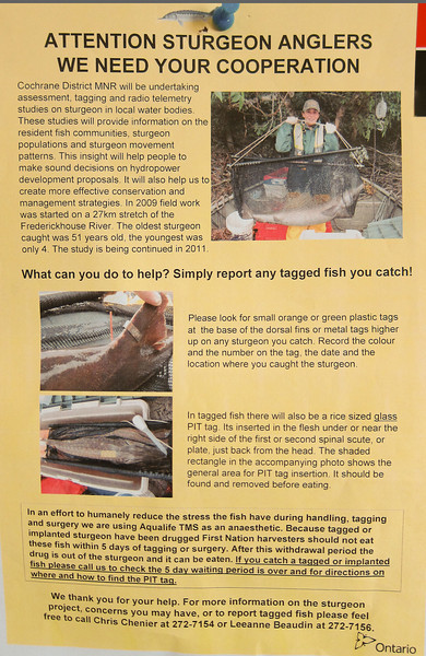 Notie for Sturgeon Anglers. NB: do not eat fish within 5 tags of tagging or surgery due to anaesthetic.