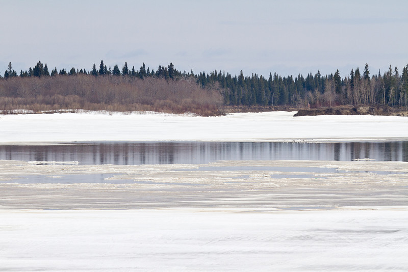 Water and reflections of trees on the ice of the Moose River 2011 April 23rd at Moosonee, Ontario.