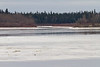 Looking across the Moose River towards the Gutway separating Charles Island from South Charles Island.