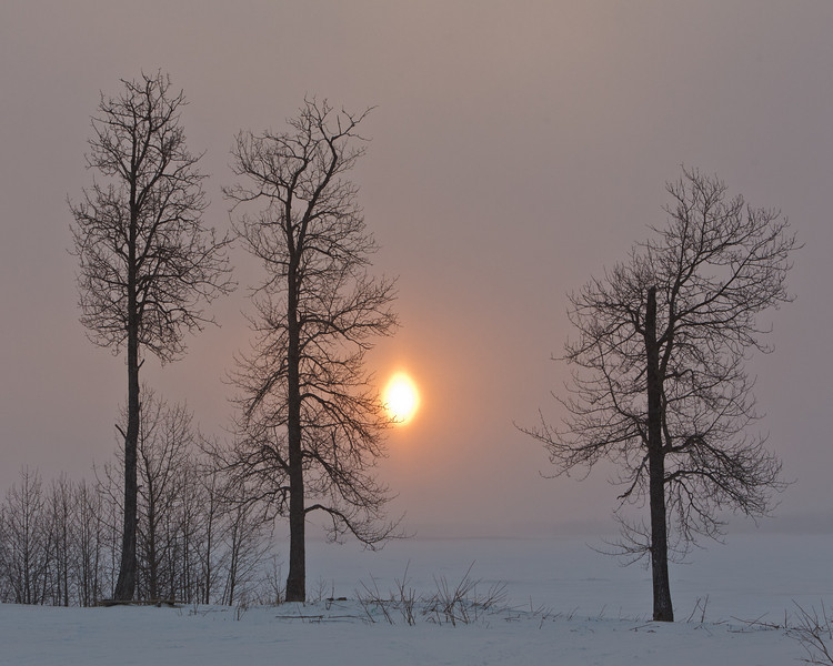 Trees and rising sun