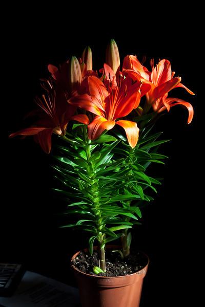 Flowers at home of Kathryn Culek