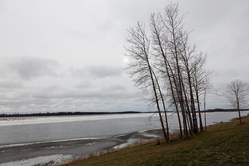 Trees along the Moose River.
