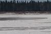 2011 November 22 snowmobile traffic on the Moose River at Moosonee, Ontario.