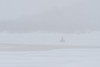 Looking up the Moose River, snowmobile in distance during snow storm 2011 April 17th.