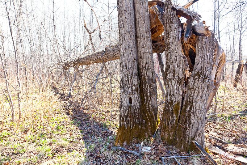 Fallen over tree between Henry Crescent and Store Creek