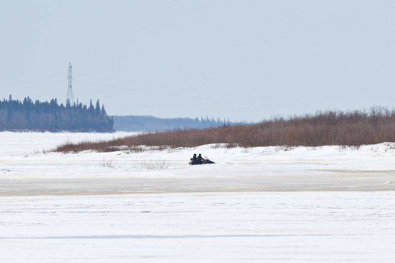 Snowmobile coming across the Moose River from Moose Factory 2011 April 19th