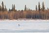 Two people walking on the Moose River in front of Charles Island