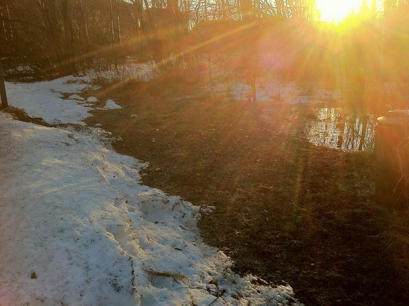"Backyard including ""pond"" 2011 April 14th"