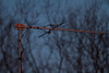 Dual band (2m/440) antenna at sunrise 2011 February 27th.