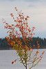 A few coloured leaves along the Moose River.