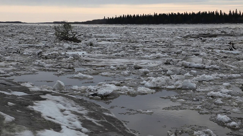 Spring breakup of the Moose River at Moosonee. Ice and debris floating out to James Bay 2011 May 1st.
