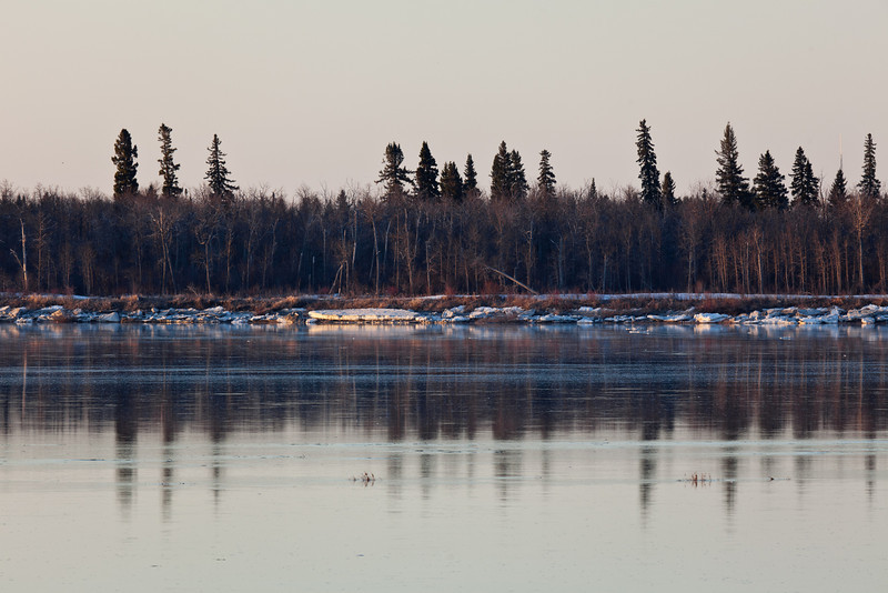 Reflections of trees in the Moose River 2011 May 5