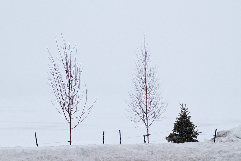 Trees along Revillon Road in snowstorm with Moose River in background.