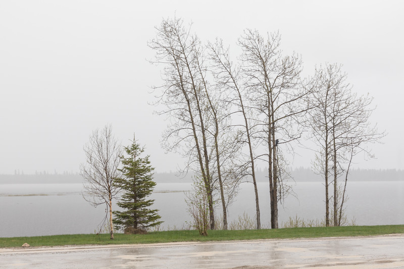 Trees along the Moose River in heavy rain.