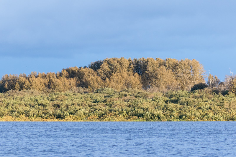 Trees across the Moose River.