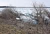 Ice pushing down bushes along shoreline