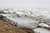 Ice along the shoreline near Revillon Road North