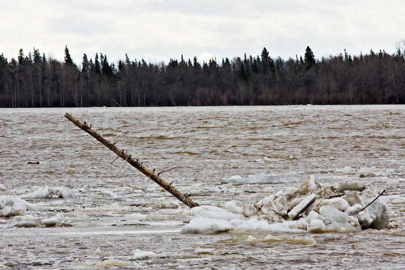 Log floating away with the ice
