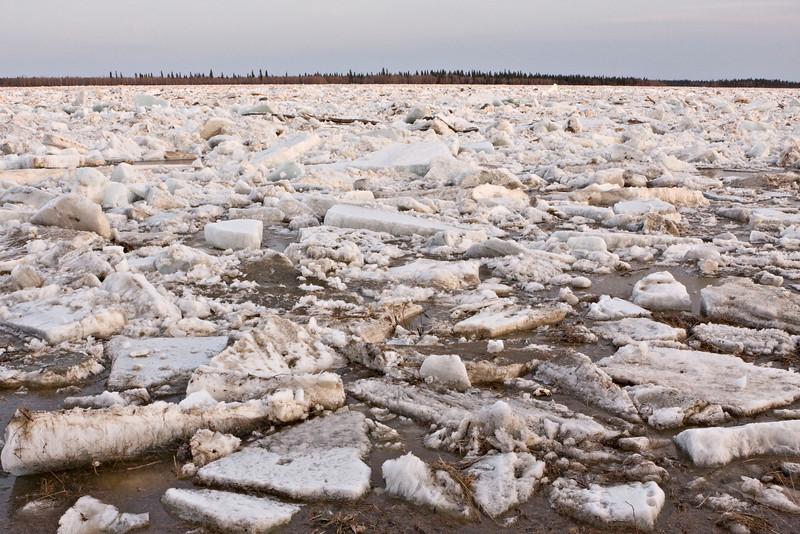 Ice on the Moose River at Moosonee