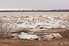 Ice along shoreline near Moosonee Pentecostal Church - note stake in ground in left foreground, water was up to that point.