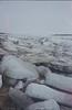 Ice on the shoreline.