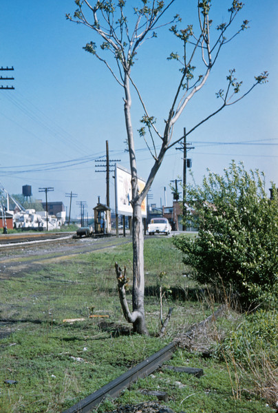 Mopac 166 - Apr 30 1957 - Tree growing out of old siding Meremee St - St Louis MO